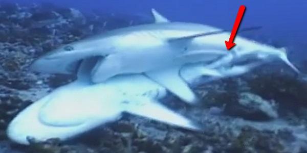 Секс с акулой